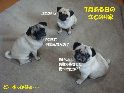 DSC08964_20120110015252.jpg