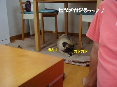 DSC08985_20120120192617.jpg