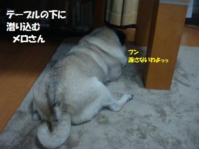 DSC09002_20120624184740.jpg