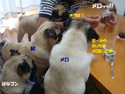 DSC09037.jpg