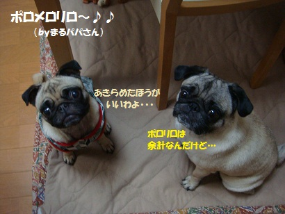 DSC09142.jpg