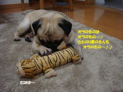 DSC09400_20120624181525.jpg