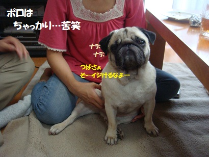 DSC09449_20120122020135.jpg