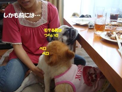 DSC09451_20120122020135.jpg