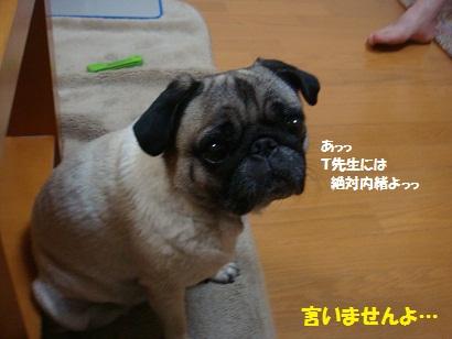 DSC09590.jpg