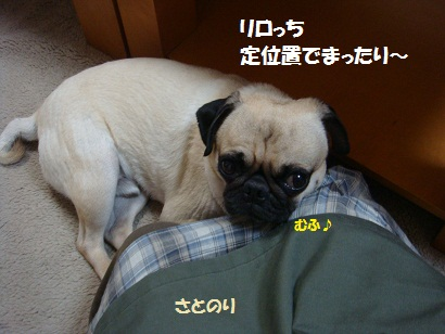 DSC09593_20120122021635.jpg