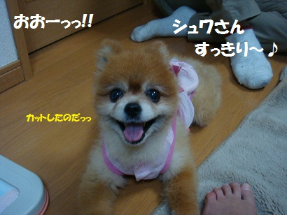 DSC09620_20120122002054.jpg