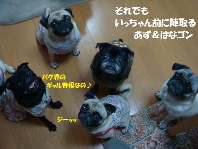 DSC09767_20120201213113.jpg
