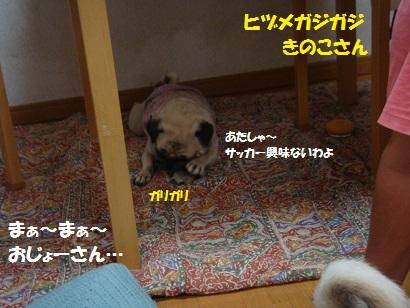 DSC09788_20120201204623.jpg