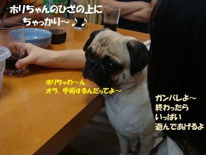 DSC09802_20120201214501.jpg