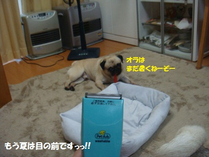 DSC09913_20120702035243.jpg