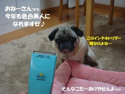 DSC09925_20120702035244.jpg