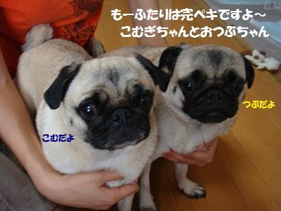 DSC09963_20120203205126.jpg