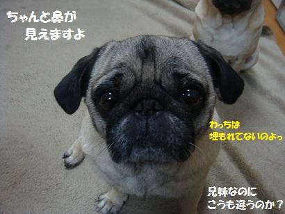 DSC09975_20120121164729.jpg