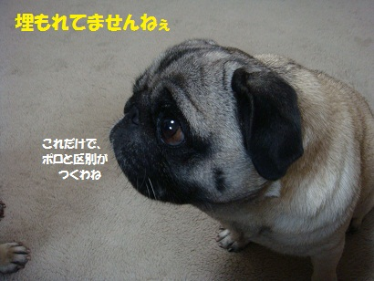 DSC09977.jpg