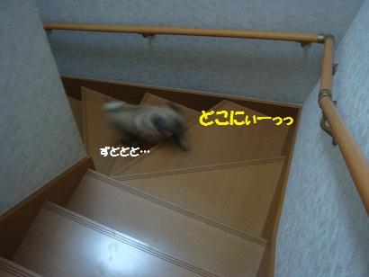 DSC09977_20120218030609.jpg