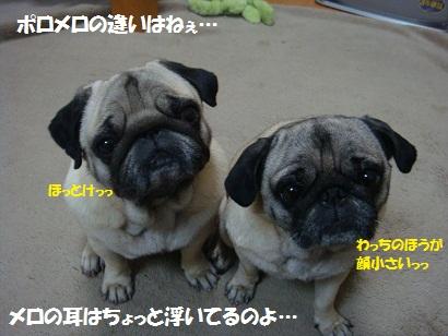 DSC09979_20120121172553.jpg