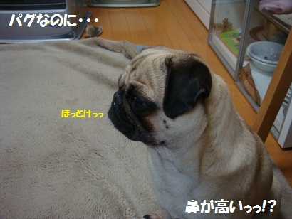 DSC09993.jpg