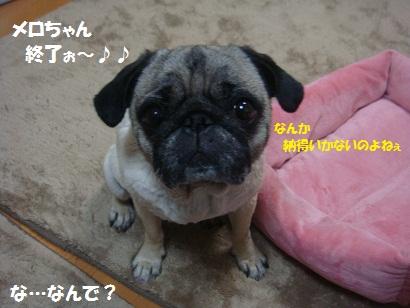 DSC09993_20120703183658.jpg