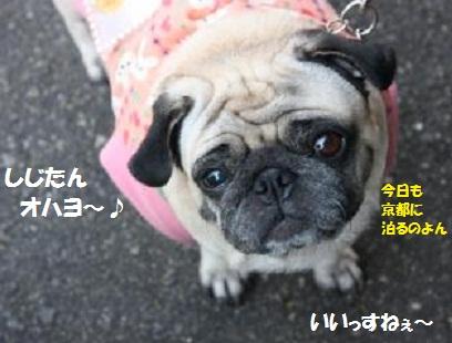 IMG_8492_convert_20111011222358.jpg
