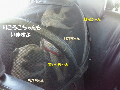 NEC_0002_20120106051155.jpg