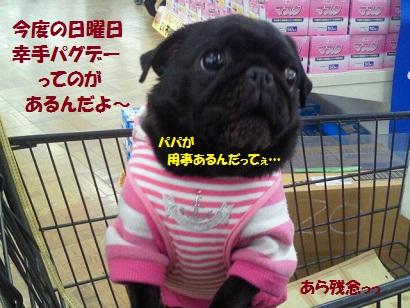 NEC_0013_20120314012554.jpg