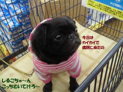 NEC_0014_20120314012554.jpg
