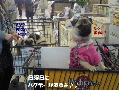 NEC_0019_20120314012622.jpg