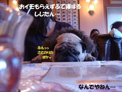 PMBS8738.jpg