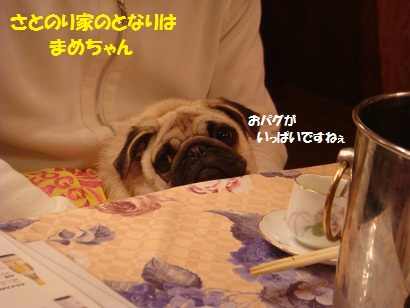 PMBS9054.jpg