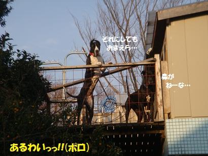 PMBS9389.jpg
