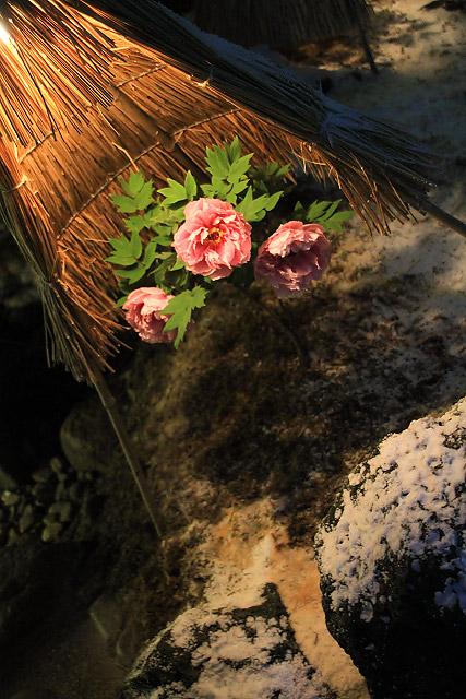 大根島 ボタン 牡丹 由志園