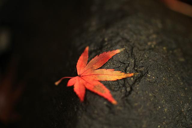 米子市 宗像神社 紅葉 写真