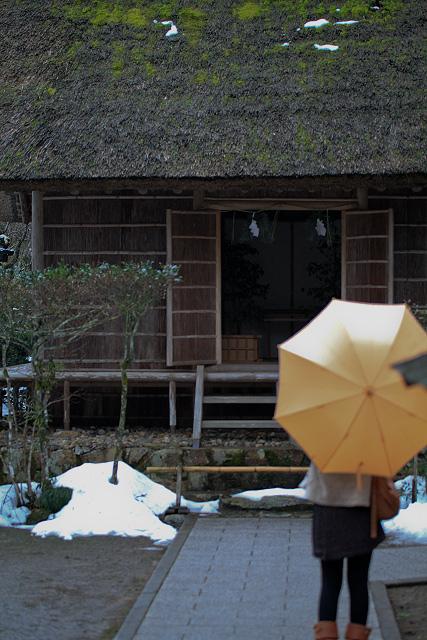 島根県 熊野大社