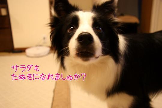 201207066.jpg