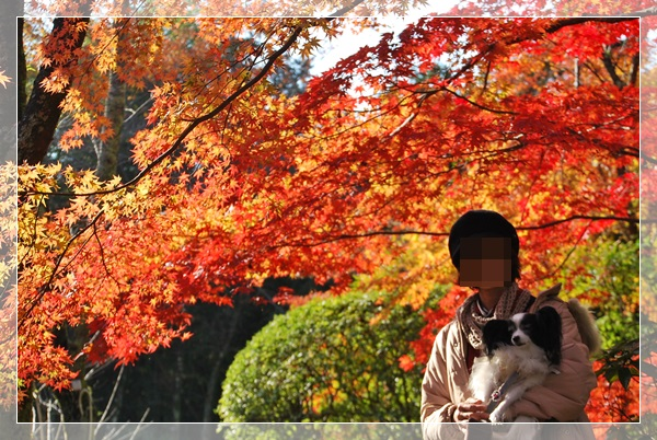 紅葉(ルビー抱っこ)