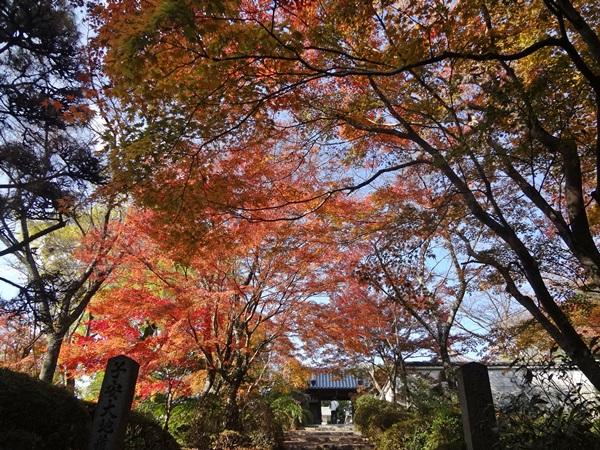 山門までの紅葉