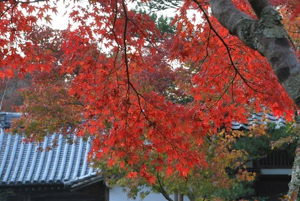延命寺楓の紅葉