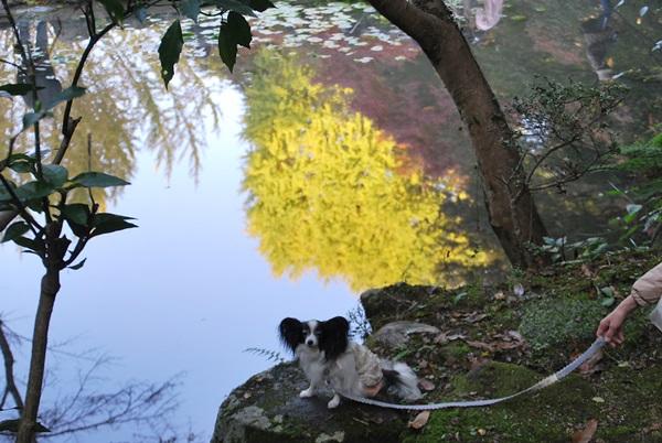 水鏡の紅葉とルビー1