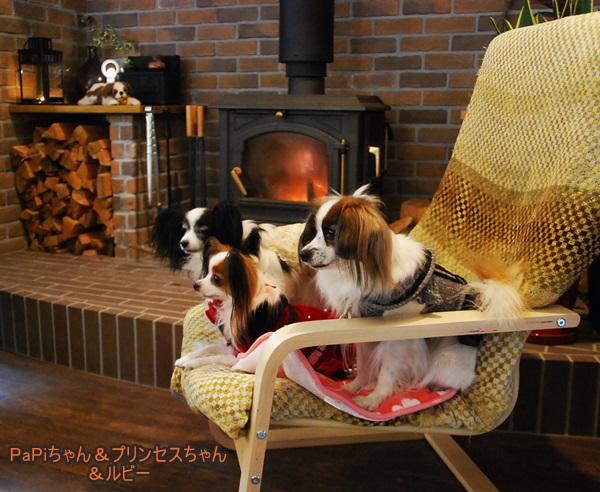 暖炉前でルビー&プリンセスちゃん&PaPiちゃん