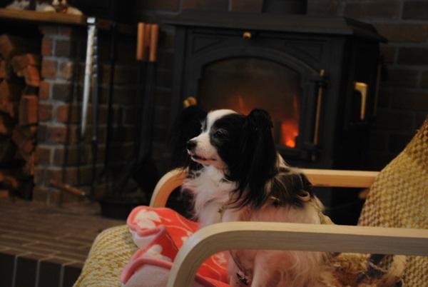 暖炉前でルビー