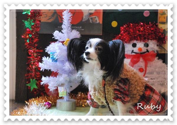 クリスマスセットでルビー