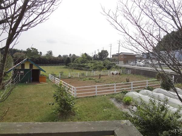 レストランCozima庭の畑と馬