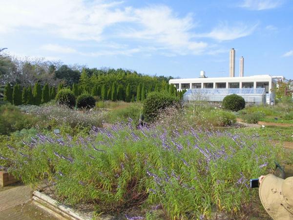 ハーブ園と青空
