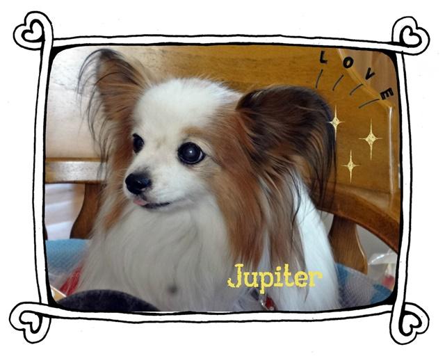 ジュピちゃん