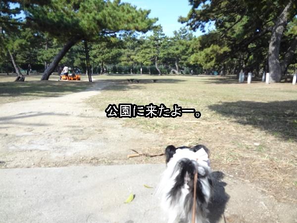 公園に来た