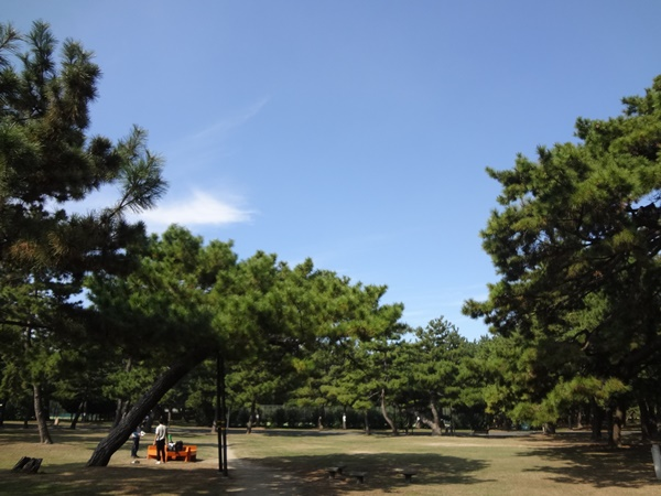 松林と青空