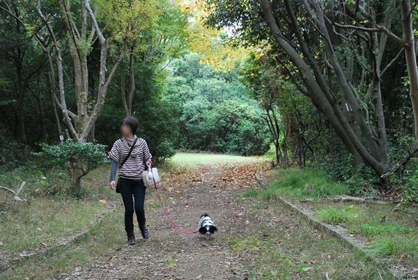 雑木林をお散歩