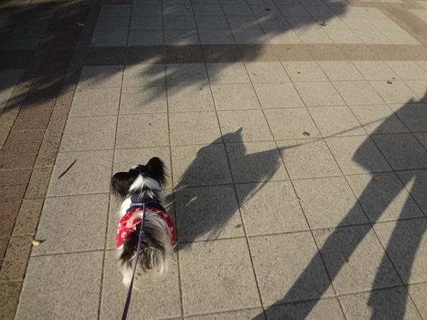 お散歩中の影