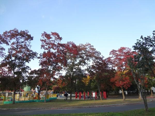 遊具の近くの紅葉